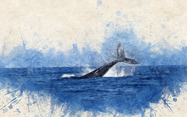 The life of Jonah in the Bible has amazing things to teach us as Christians