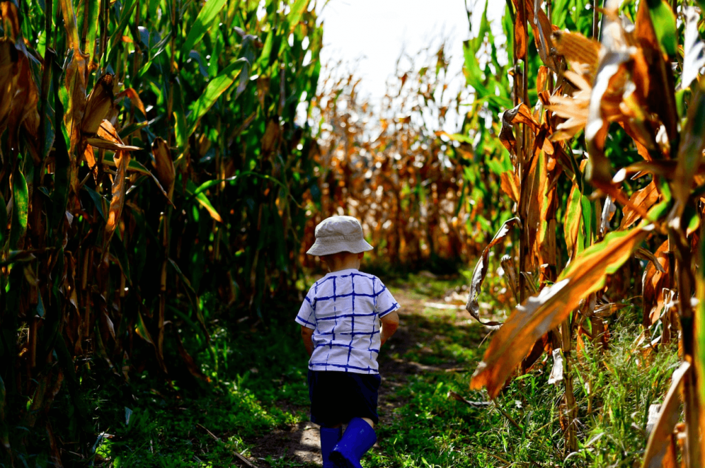 Going in a corn maze for alternative ways to celebrate halloween
