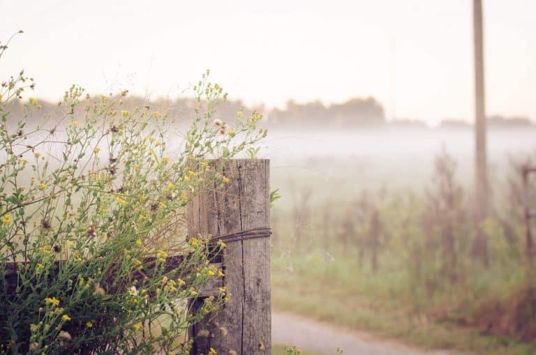 25 Uplifting Bible Verses for a Good Morning