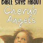Cherubim Angels