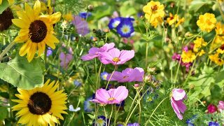 25 Interesting Bible Verses about Flowers
