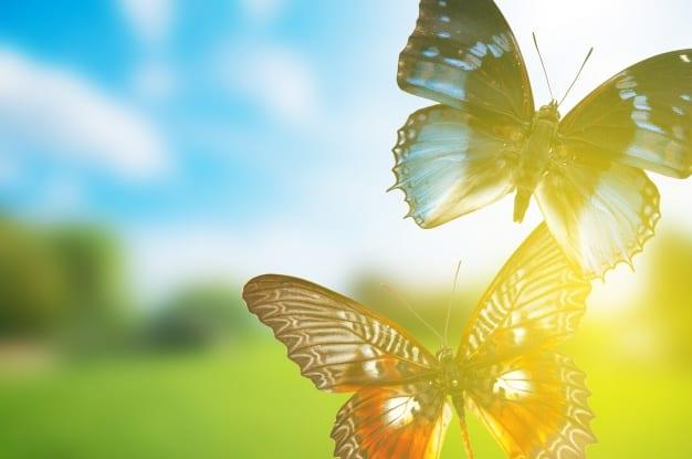 butterflies in dreams meaning