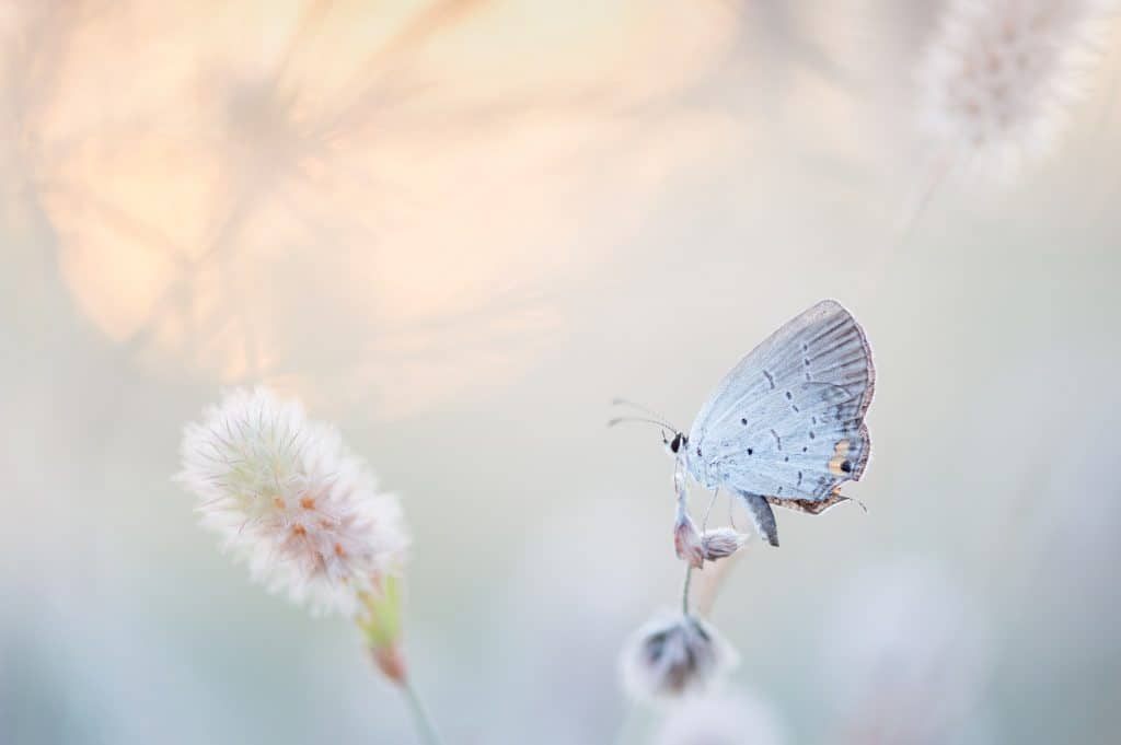 White butterfly meaning in dream