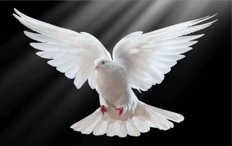 The Powerful Gifts of the Holy Spirit