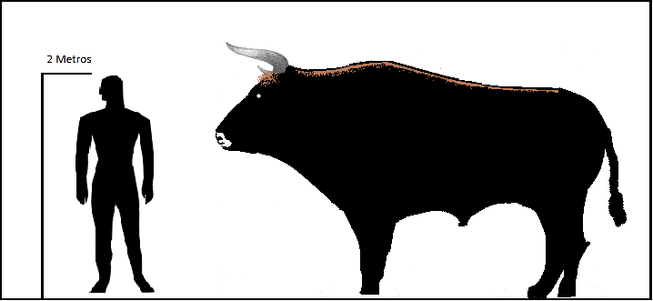 Size chart of Aurochs. Could they have been the unicorns of the Bible?