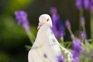 symbolism of the holy spirit