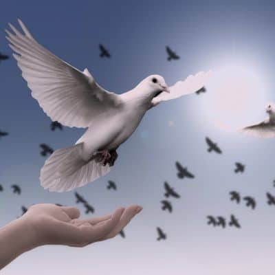 The work of the holy spirit in the life of the believer