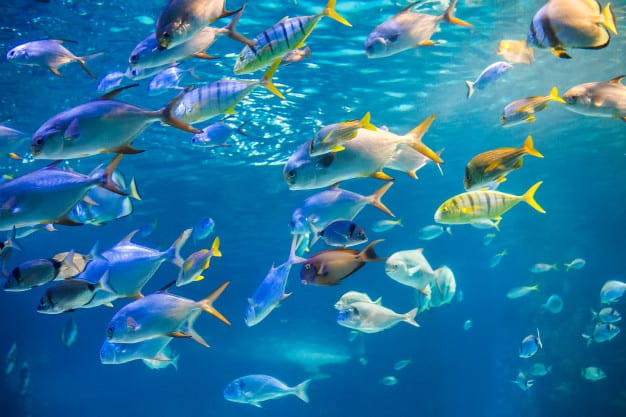 fish in the dream means (school of fish)