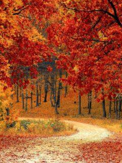 autumn Bible verses