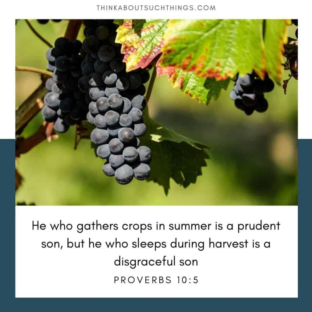 summertime verse Proverbs 10:5